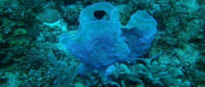 RD asume compromisos para proteger y conservar arrecifes de coral